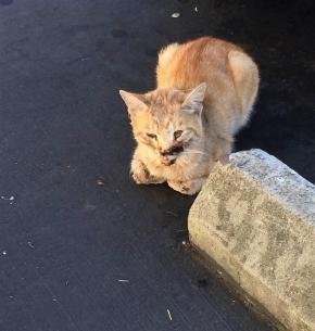 Mister Pickie,povestea impresionanta a unei pisici lovita demasina